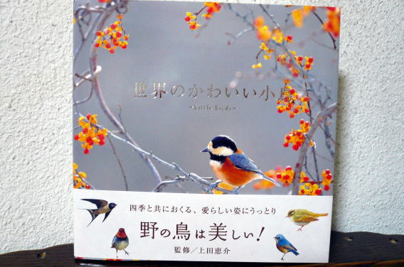 20141224blog6.jpg